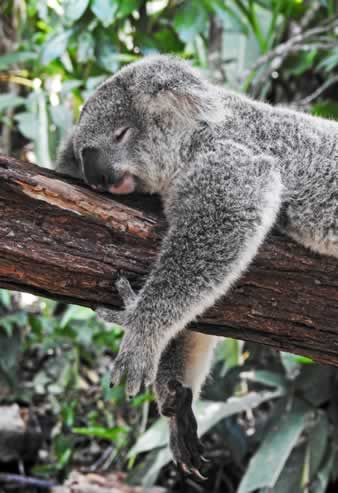 Surprising Sleep Facts in the Animal Kingdom